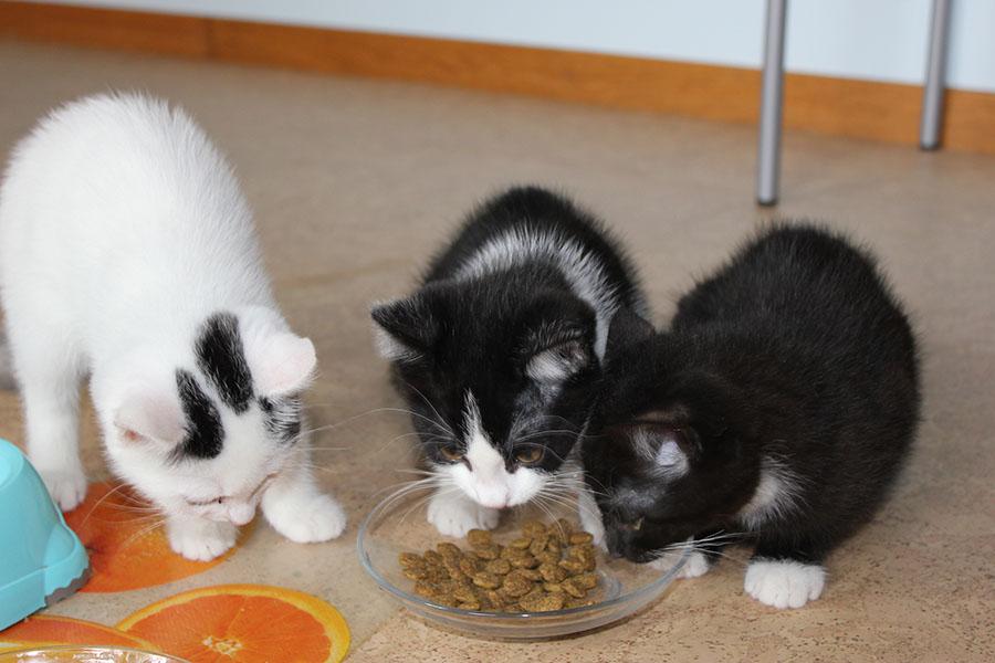 Drei Katzen
