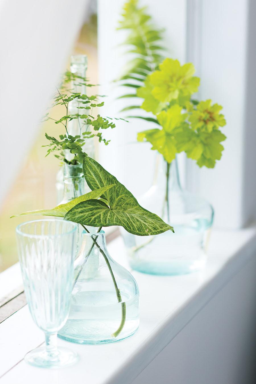 Pflanze in Glas